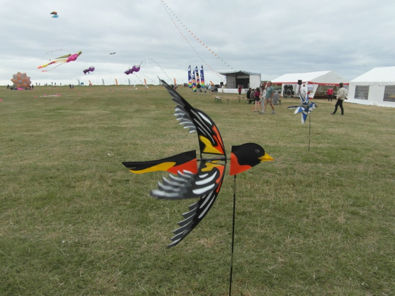 La fête du vent à Penvins (Sarzeau) Sam_3721