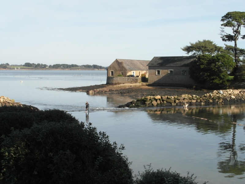 Du côté de la petite mer: Larmor Baden Sam_4513