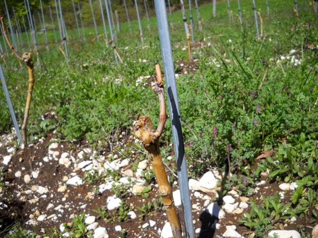 Plantation vigne - Page 2 Dscn0011