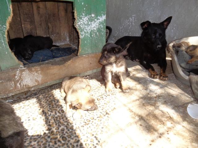 MALO - croisé berger, pelage charbonné foncé, né en mars 2016 - bébé de Indie (en FA dans le 13)- SOS-R-SC-30MA- Aazzzz10