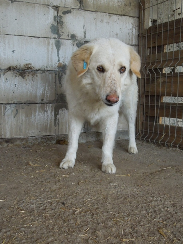 BALANUCH, mâle croisé berger sauvé de Pallady, né en 2009 parrainé par Nathalie Gamblin-Gage Coeur  Myri_Bonnie-SC-R-SOS- Balanu10