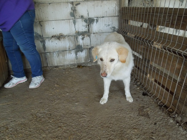 BALANUCH, mâle croisé berger sauvé de Pallady, né en 2009 parrainé par Nathalie G. -Gage Coeur  Myri_Bonnie-SC-R-SOS- Balanu13