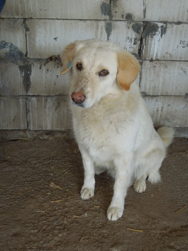 BALANUCH, mâle croisé berger sauvé de Pallady, né en 2009 parrainé par Nathalie G. -Gage Coeur  Myri_Bonnie-SC-R-SOS- Balanu14