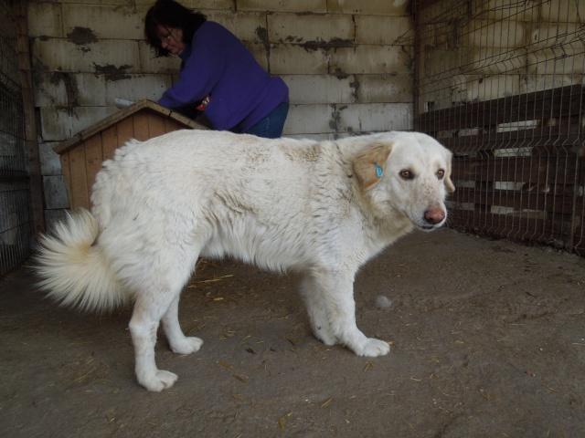 BALANUCH, mâle croisé berger sauvé de Pallady, né en 2009 parrainé par Nathalie G. -Gage Coeur  Myri_Bonnie-SC-R-SOS- Balanu15