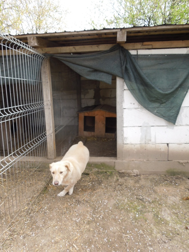 BOX (trois) , croisé labrador, né en 2007 -  Parrainée par Samie -R-F-SOS-SC- - Page 2 Box10