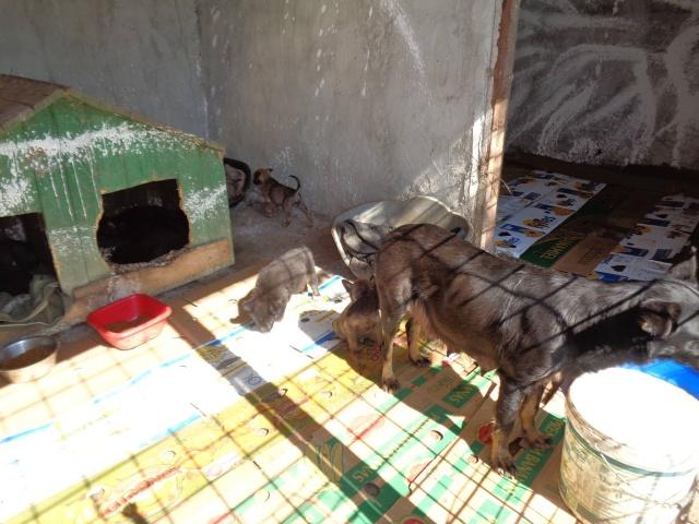 MALO - croisé berger, pelage charbonné foncé, né en mars 2016 - bébé de Indie (en FA dans le 13)- SOS-R-SC-30MA- Famill15