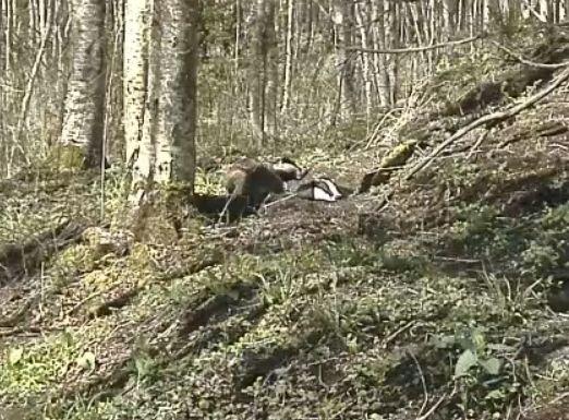 Wildtier-Livecams - Seite 26 10_5_111