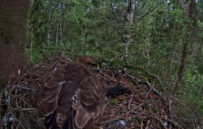 Wildtier-Livecams - Seite 27 16_5_110