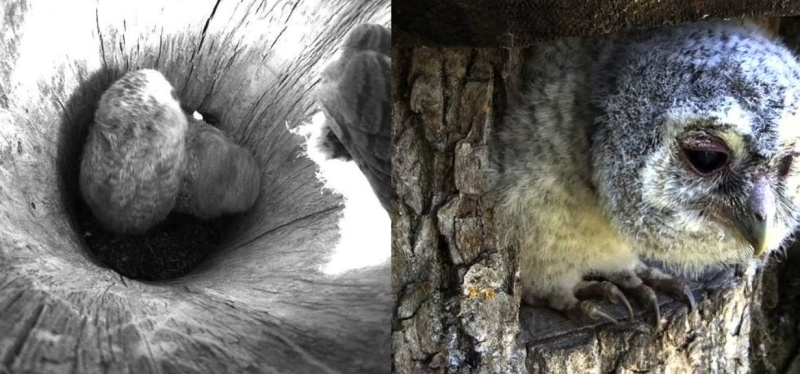 Wildtier-Livecams - Seite 26 Aussic22