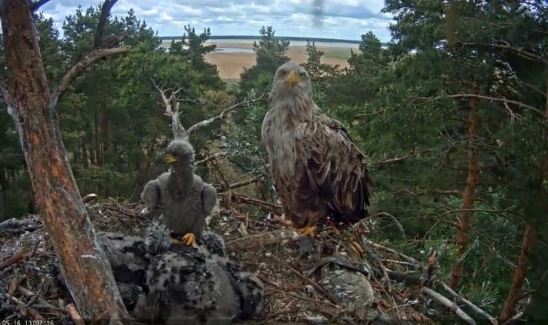 Wildtier-Livecams - Seite 27 Die_ne14