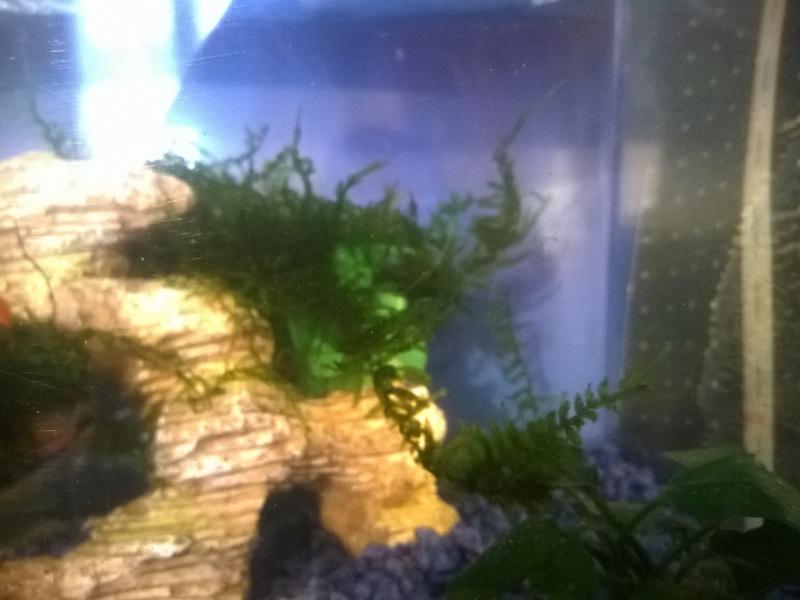 MARINA Goldfish  Aqua_610