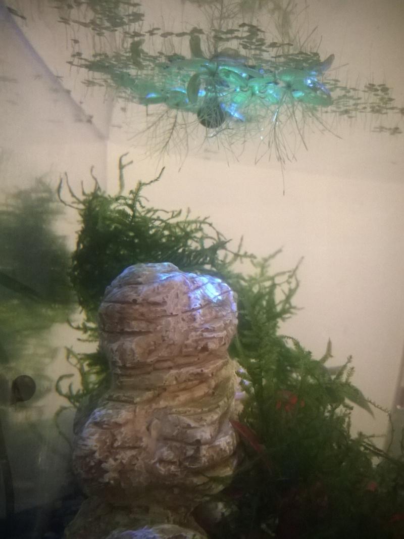 MARINA Goldfish  Wp_20115