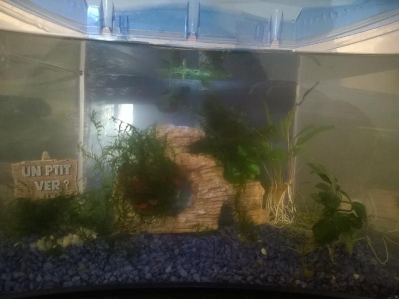 MARINA Goldfish  Wp_20120