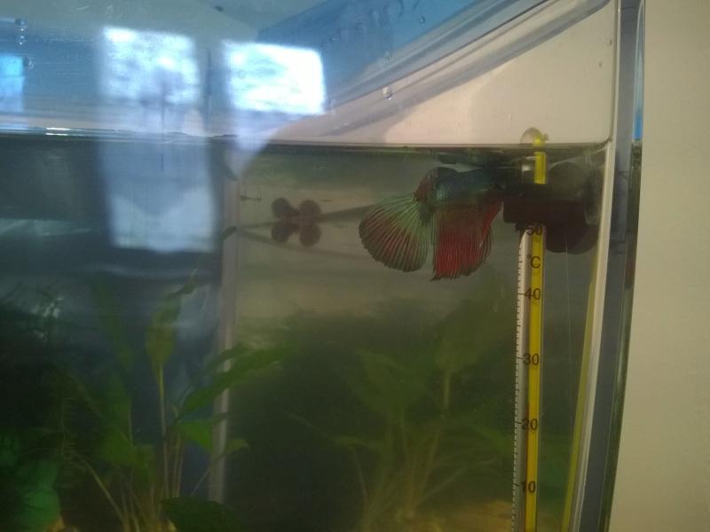 MARINA Goldfish  Wp_20121