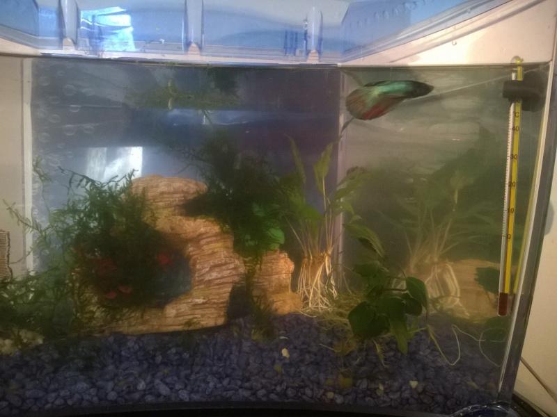 MARINA Goldfish  Wp_20122