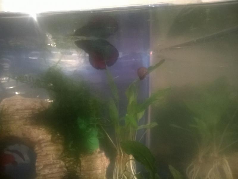MARINA Goldfish  Wp_20126