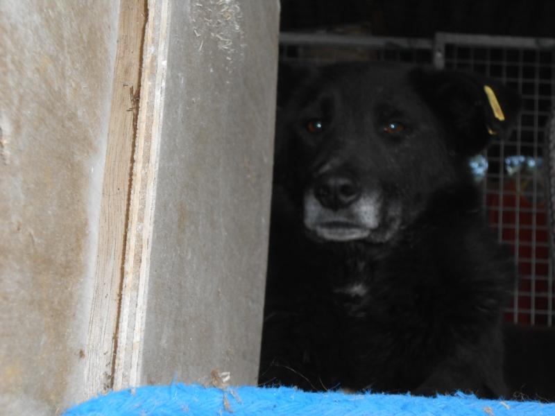 VIOLETTE - Femelle croisée, taille moyenne née env décembre 2010 (PASCANI) - en FA chez kimcham (dpt49) - doit changer de famille ! - Page 6 Ccc_0210