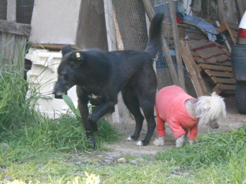 VIOLETTE - Femelle croisée, taille moyenne née env décembre 2010 (PASCANI) - en FA chez kimcham (dpt49) - doit changer de famille ! - Page 7 V_00910