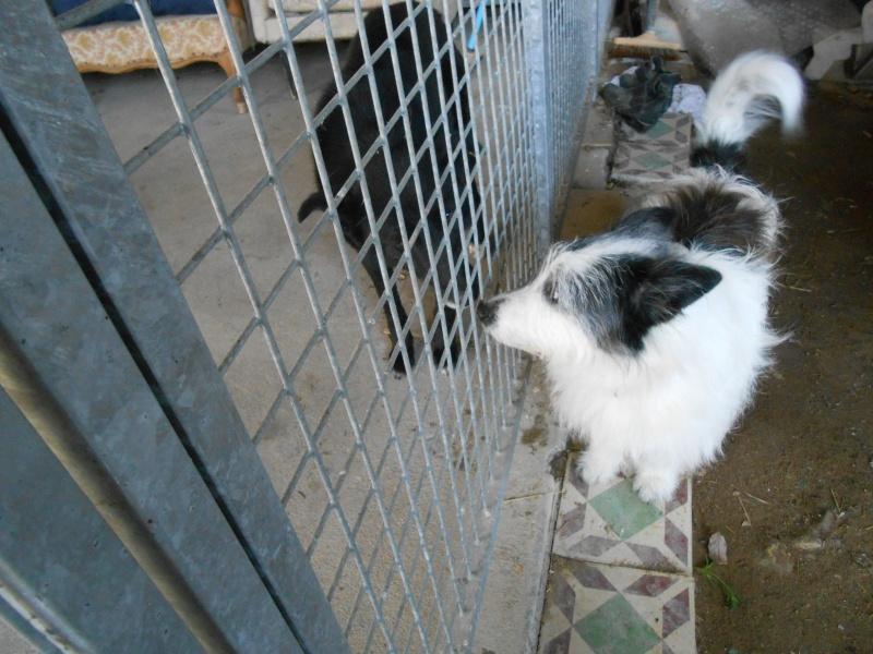 VIOLETTE - Femelle croisée, taille moyenne née env décembre 2010 (PASCANI) - en FA chez kimcham (dpt49) - doit changer de famille ! - Page 6 Violet14