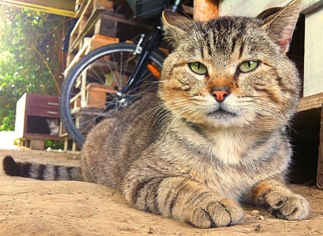 *** spécial *** photos de nos animaux *** - Page 15 Photo110