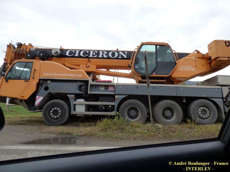 Les grues de CICERON (France) P1050812