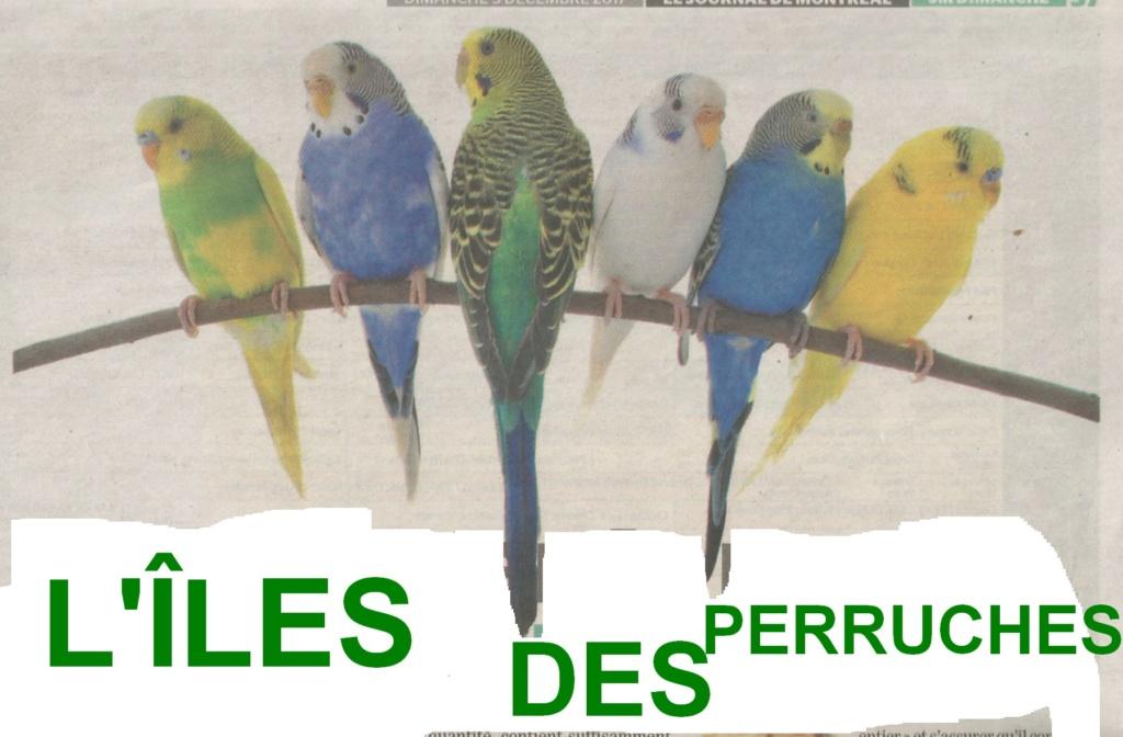 L'ÎLE DES PERRUCHES Sans_t18