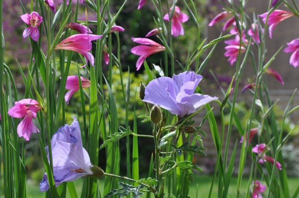 avril, jardin fébrile - Page 5 004_6011