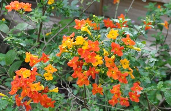 avril, jardin fébrile - Page 5 009_6010