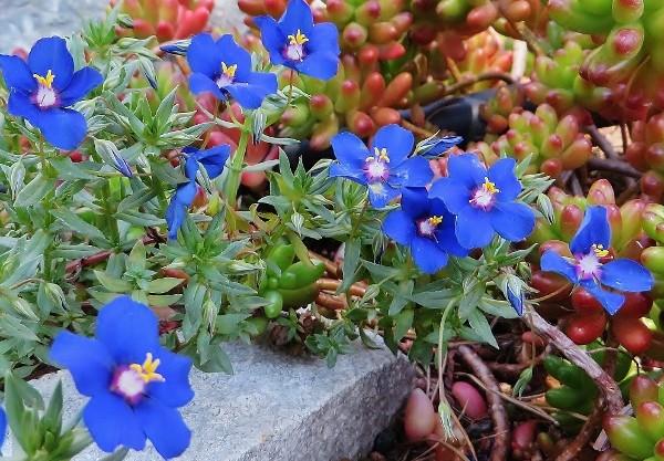 avril, jardin fébrile - Page 7 075_6010