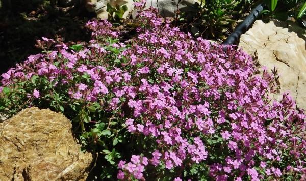 avril, jardin fébrile - Page 7 085_6010