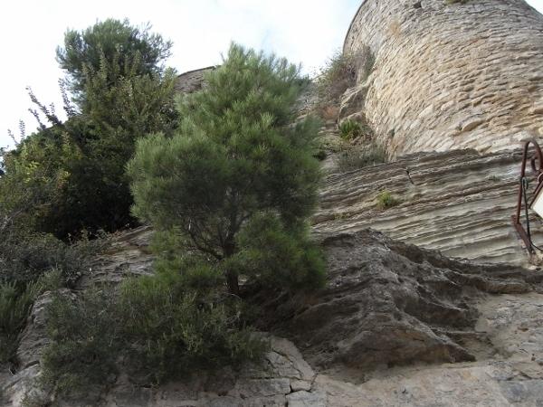 flore des vieux murs, rochers  et rocailles naturelles - Page 7 Aout_211
