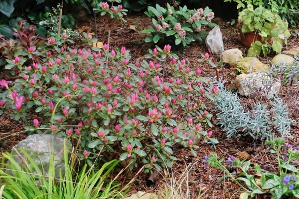 avril, jardin fébrile - Page 2 Jardin18