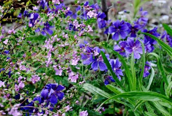 joli mois de mai, le jardin fait à son gré - Page 4 Jardin32