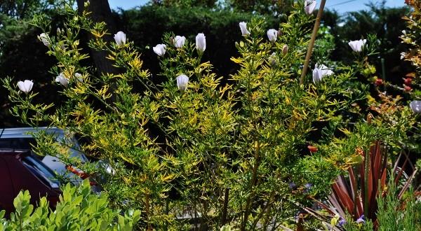 joli mois de mai, le jardin fait à son gré - Page 4 Jardin33