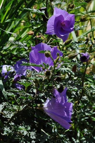 joli mois de mai, le jardin fait à son gré - Page 4 Jardin34
