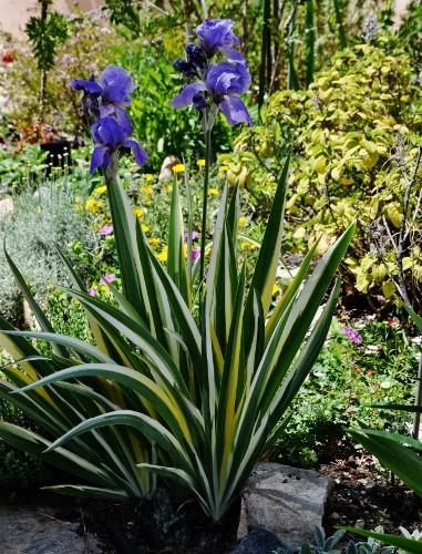 joli mois de mai, le jardin fait à son gré - Page 4 Jardin35