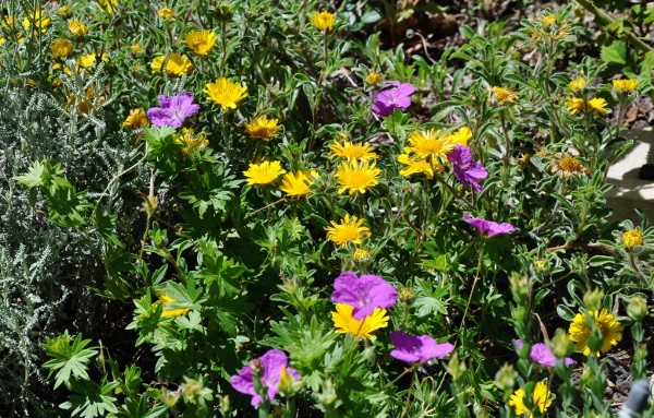 joli mois de mai, le jardin fait à son gré - Page 4 Jardin36