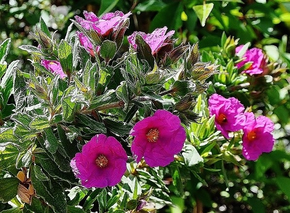 joli mois de mai, le jardin fait à son gré - Page 5 Jardin41