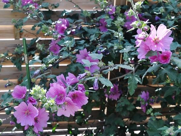 joli mois de mai, le jardin fait à son gré - Page 5 Jardin42