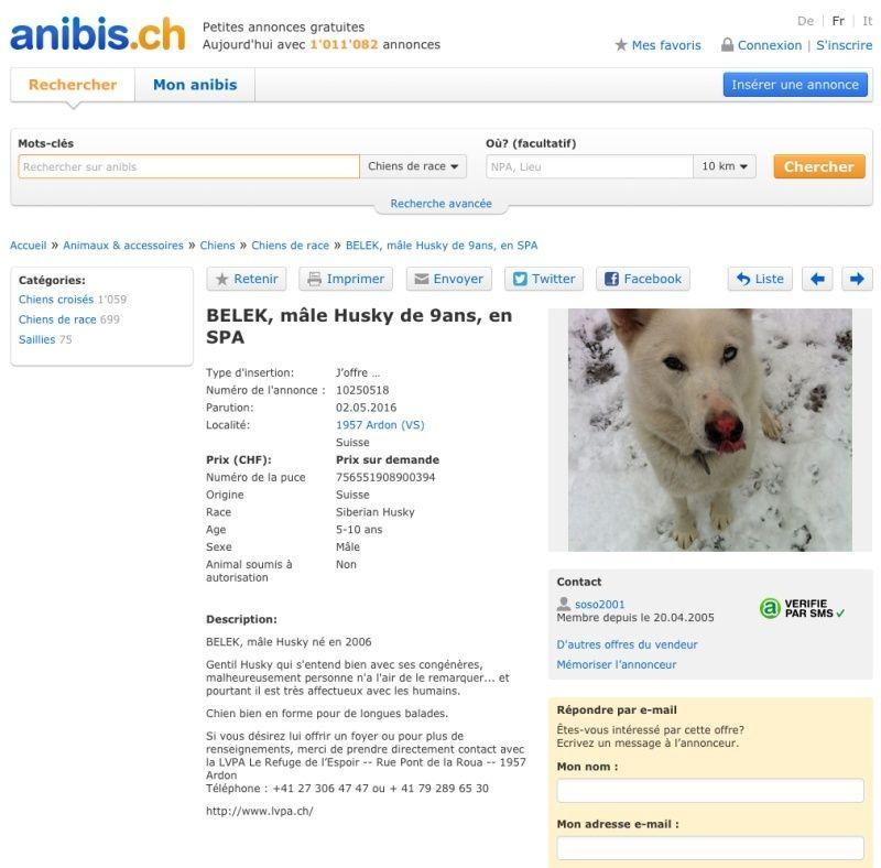 BELEK, Husky (m), né le 06.04.2006 REFU Suisse - Page 2 Belek_10