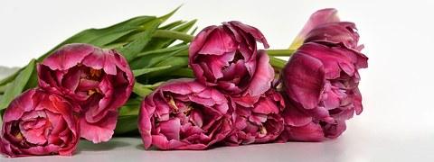 """"""" Histoires Vraies """" ou  Le Savoir """"  Tulips10"""