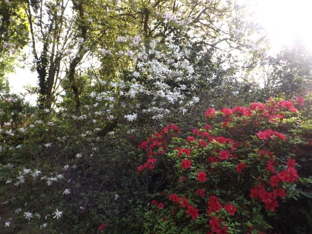 joli mois de mai, le jardin fait à son gré - Page 2 Dscf4030