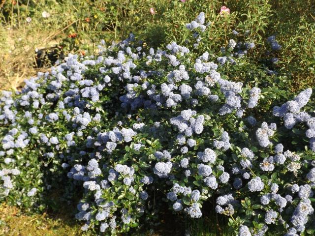 joli mois de mai, le jardin fait à son gré - Page 2 Dscf4031
