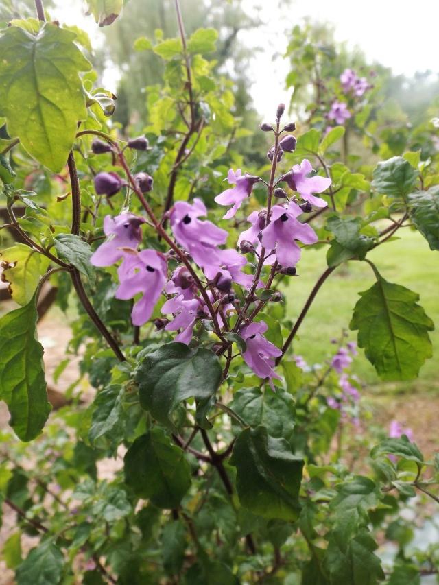 joli mois de mai, le jardin fait à son gré - Page 4 Dscf4114