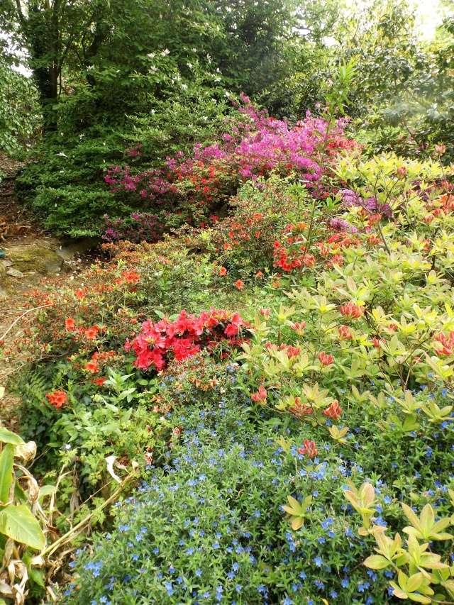 joli mois de mai, le jardin fait à son gré - Page 4 Dscf4117