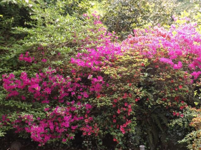 joli mois de mai, le jardin fait à son gré - Page 5 Dscf4131