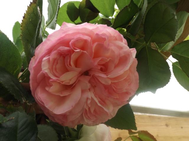 cadeaux du jardin, juin juin Dscf4215