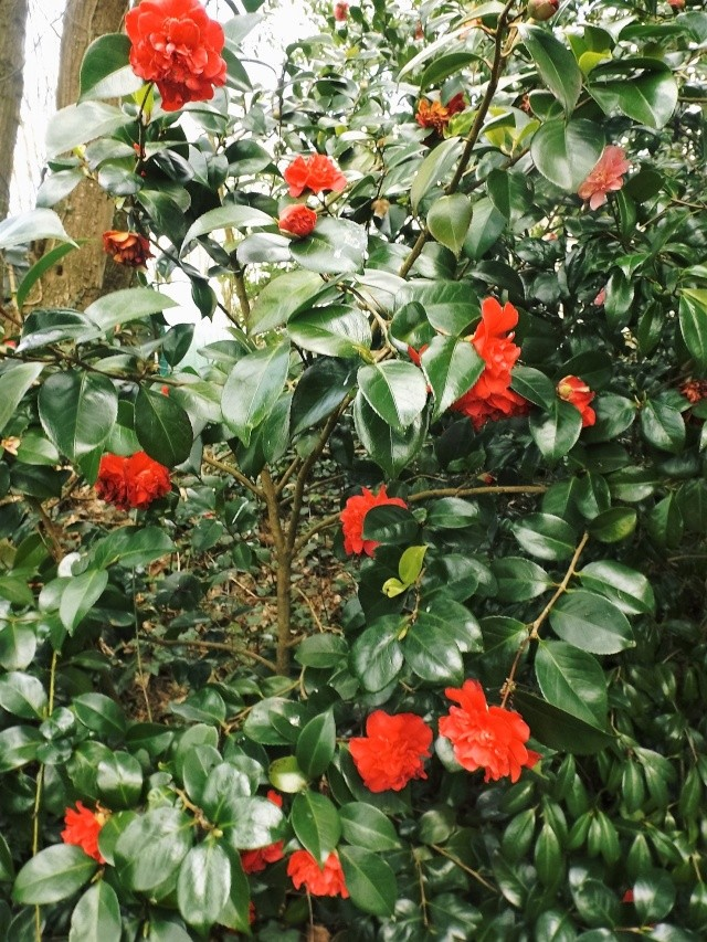 avril, jardin fébrile - Page 3 Nouvea13
