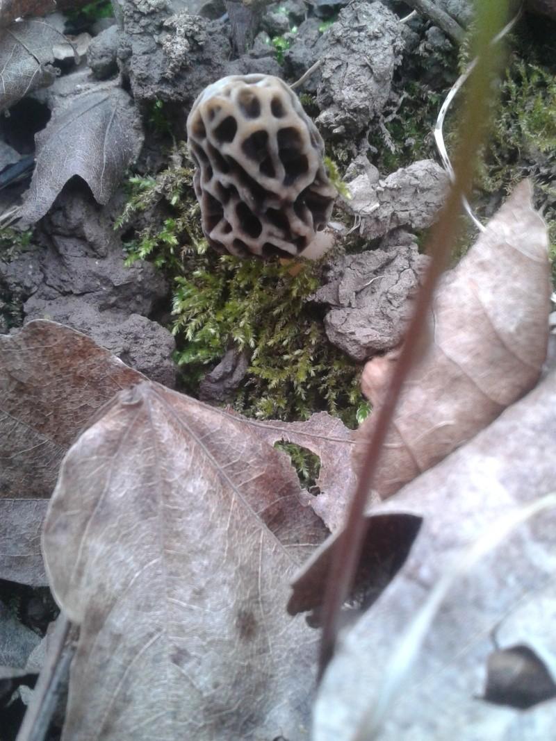 Les champignons , ( girolles , cèpes , morilles ) etc ...  - Page 41 20160342