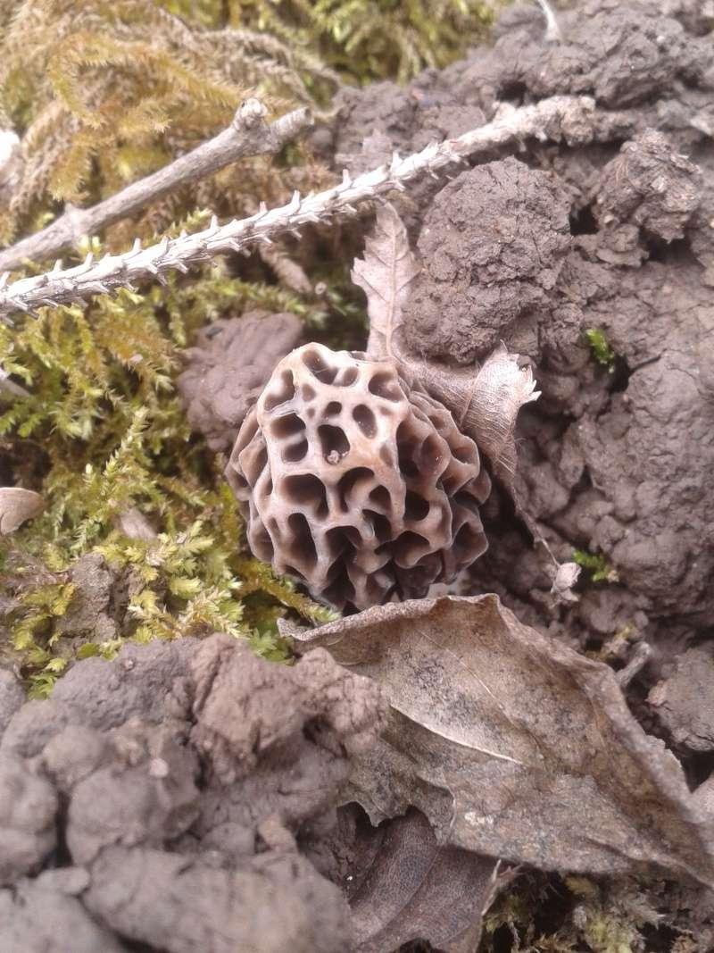 Les champignons , ( girolles , cèpes , morilles ) etc ...  - Page 41 20160347